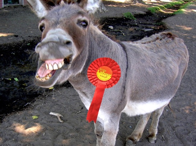 Donkey Labour rosette 650